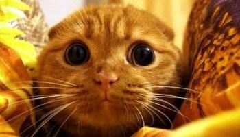 Video Di Gatti Arrabbiati Amici Mici