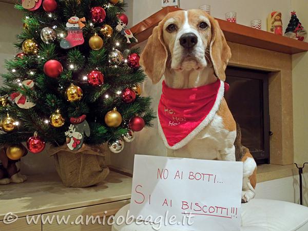 beagle botti