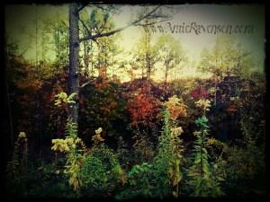 Autumn Gorge