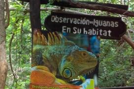 Iguanario en Cadena de cascadas el Chiflón