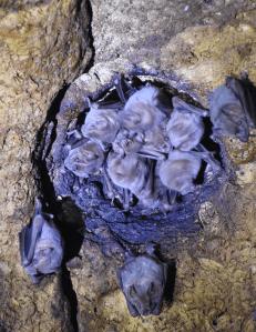 Monitoreo de murcielagos en Kantemo