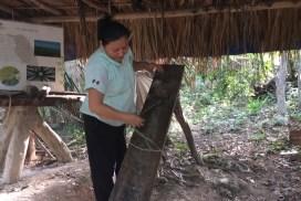 Henequen, algodon y caña en Kiichpam Kaax