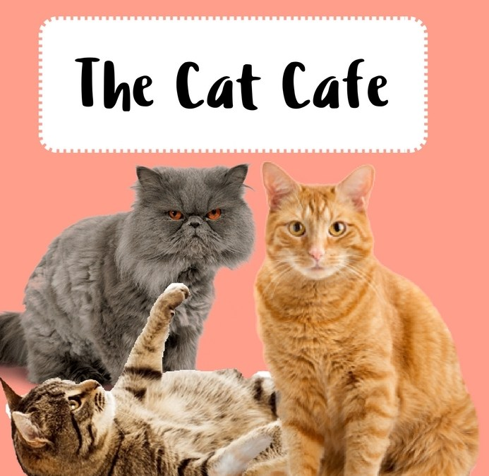 Amazing Cat Cafe