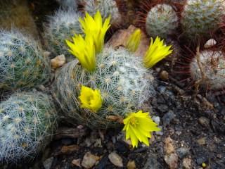 08 - cactus
