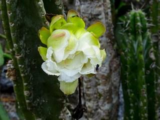 10 - cactus