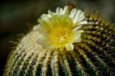 23-cactus