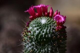 27-cactus