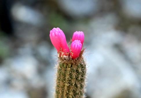 10-cactus