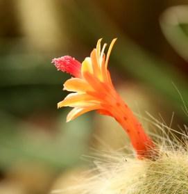 16-cactus