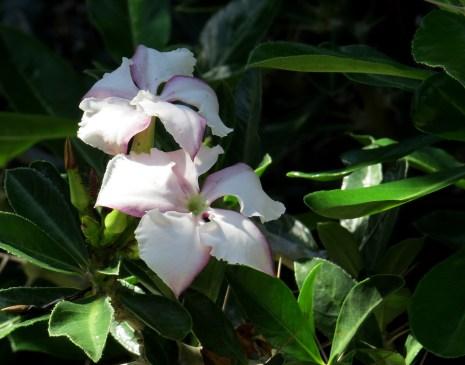 22-cactus-branco