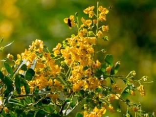 053-arvore-de-flores-amarelas