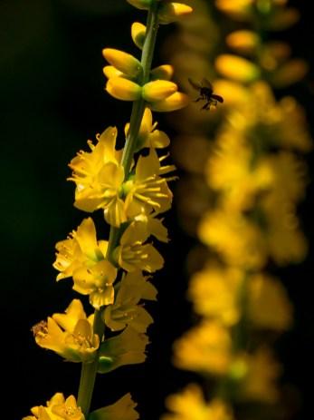 085-dyckia-brevifolia