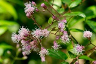 76 - Flor pequena cor de rosa