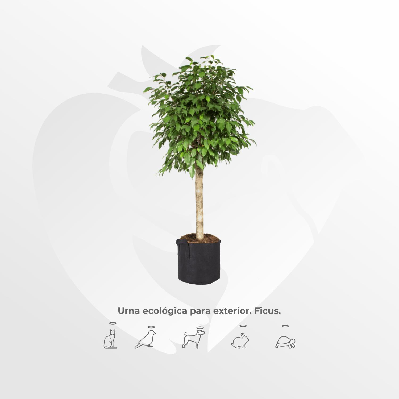Urna ecológica Ficus