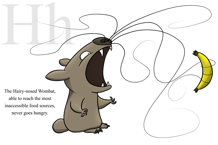 H is for Hairy-nosed Wombat