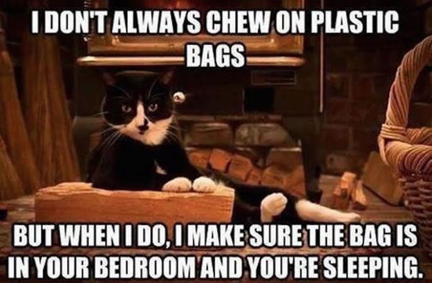 I don't always chews on plastic bags but when I do, I make sure the bag is in your bedroom and you're sleeping.