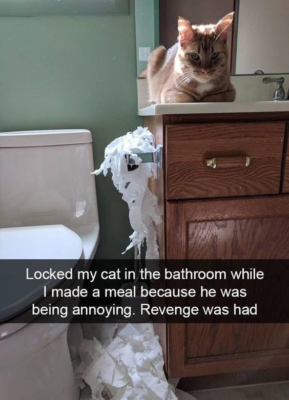 Mad cat in the bathroom