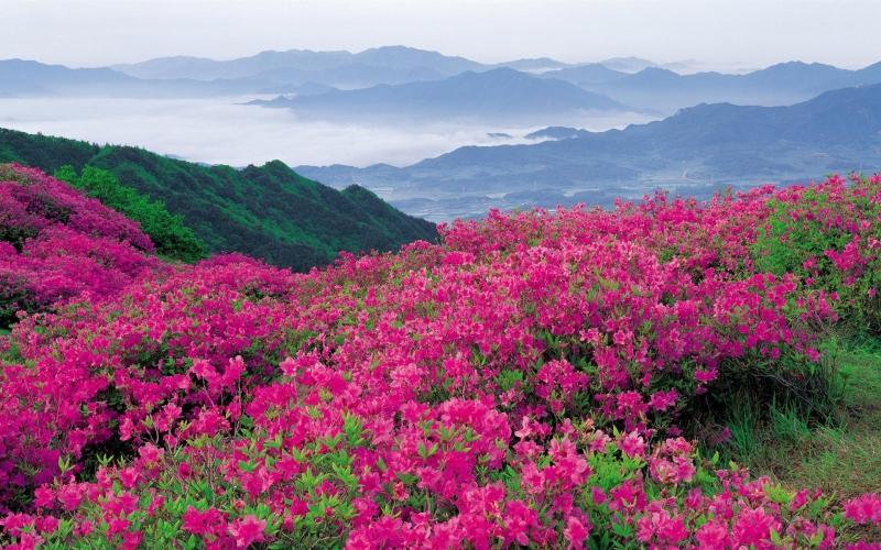 Trek to Hemkund and Valley of Flowers – Buildup