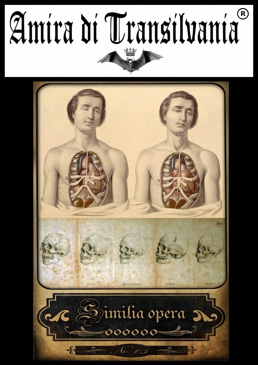 Tarocchi dell'antica medicina e anatomia volume 1 Un mazzo di 22 carte grandi di dimensioni 10 x 14 centimetri-vol-1