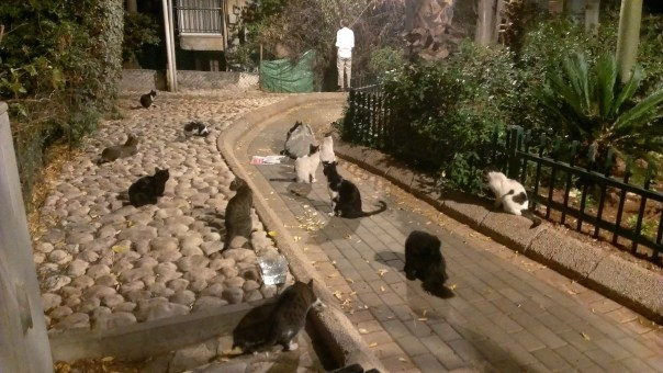 Cats waiting for their meal in Tel Aviv