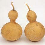 Bottle Gourd 4 Inch 2