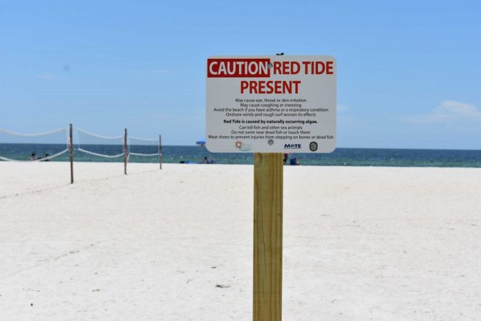 "Red Flood Mark ""title ="" Red Flood Mark ""/> </div> <p>  MANATEE COUNTY – Red Flood continues to affect the beaches of Anna Maria Island and Manatee County waterways. </p> <p>  In the water samples tested by the Florida Fish and Animal Conservation On Friday, August 24, the red numbers were as follows: </p> <ul> <li>  High on the Rod and Reel Pier </li> <li>  High on the Palma Sola Bay Bridge </li> <li>  High on Longboat Pass Boat Ramp </li> </ul> <p>  Respiratory Distress was reported in Manatee County on Coquina Beach and Manatee Beach from August 16 to 23. During this week, the waters of Manatee County showed a minimal change in red tidal cell concentrations compared to the previous week. </p> <blockquote class="