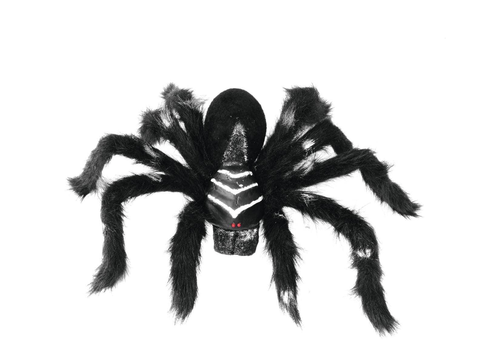 halloween spider real black