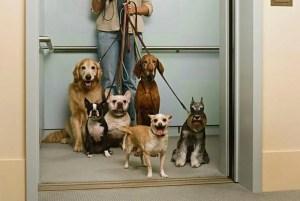 Regole da rispettare con il cane in ascensore condominiale | parti comuni