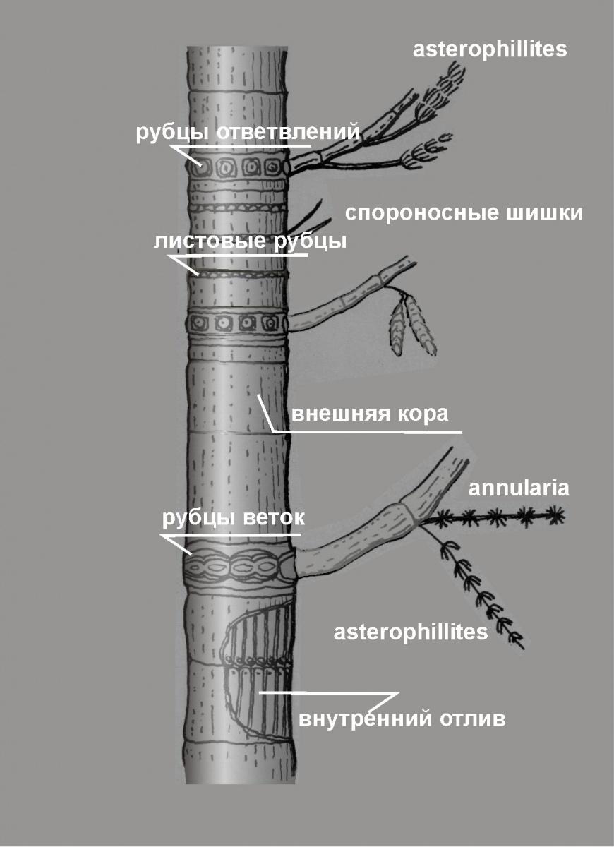 Галерея Схемы и реконструкции