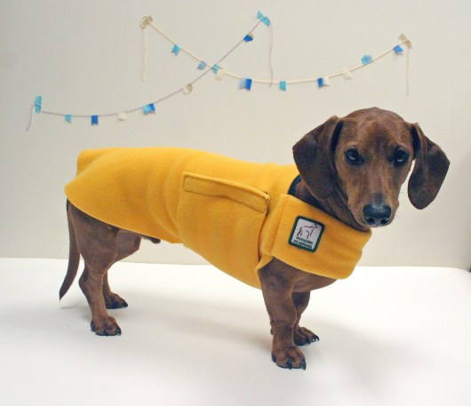 ammo the dacshund k9 voyagers coat
