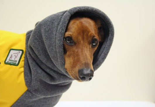 Fetching Finds: My New Voyager Jackets | Ammo the Dachshund