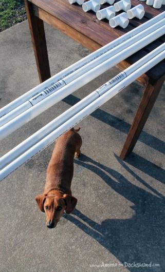 ammo the dachshund diy dog agility jumps