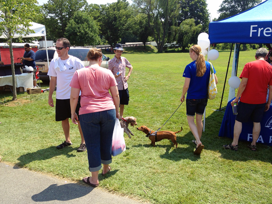4th of July - Downingtown Good Neighbor Day - Ammo the Dachshund
