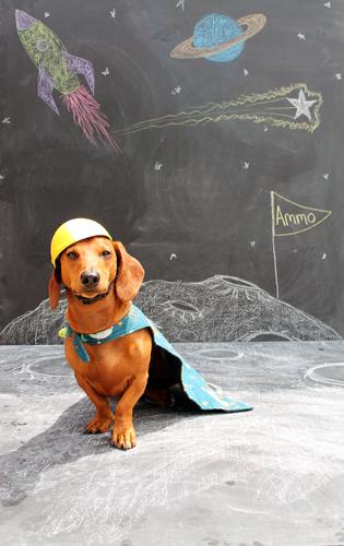 Ammo the Dachshund - Super Hero - On the Moon