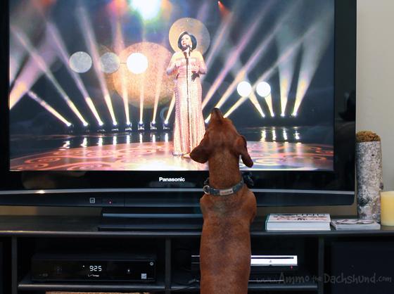 Oscars Recap // Ammo the Dachshund