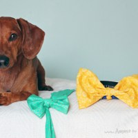 5 Minute No Sew DIY Easter Bowtie for your Pet