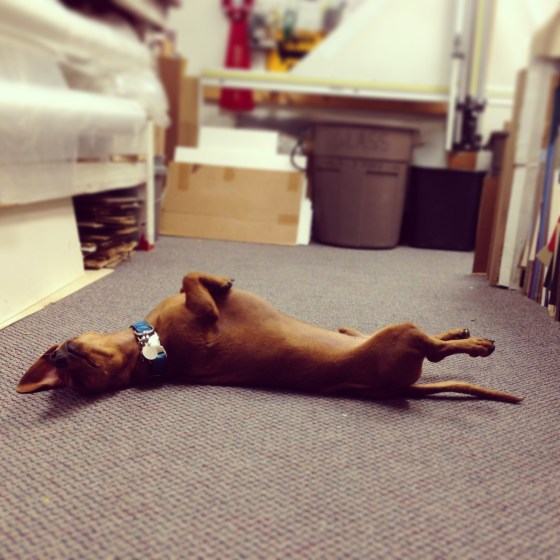 Shop Dog // Work // Ammo the Dachshund