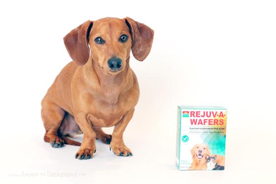 Can I Give My Dog Chlorella