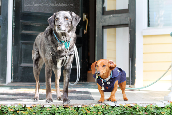 Road Trip with Ammo - Dog Friendly Downtown Charleston, South Carolina