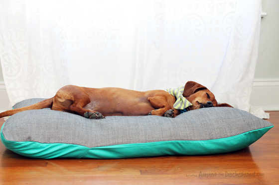 Charlie Be Good Bowtie & Dog Duvet Review & Giveaway // Ammo the Dachshund