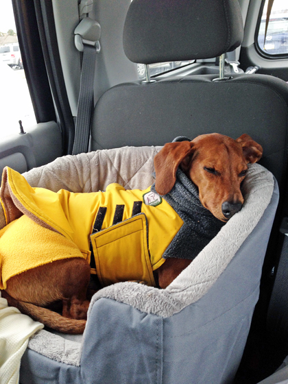 A Car Travel Bed To Keep Your Dog Safe Ammo The Dachshund