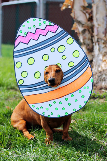 Happy Easter from Ammo the Dachshund