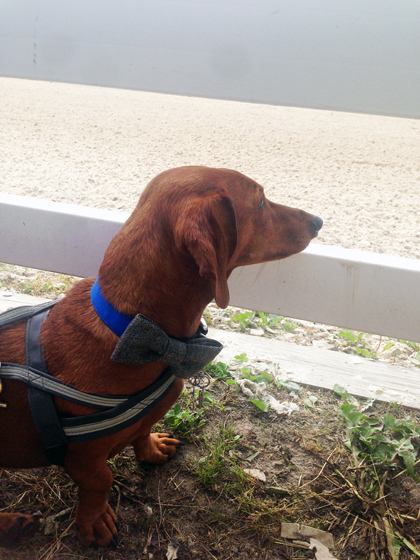 My Busy Memorial Day Weekend // Ammo the Dachshund