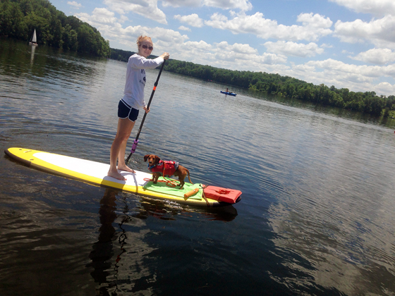 Stand Up Paddleboarding with your dog // Ammo the Dachshund