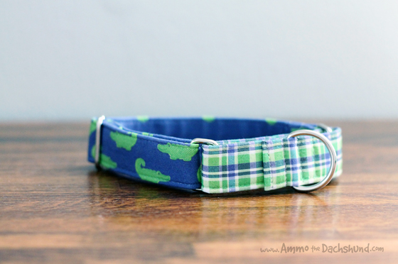 The Eclectic Hound Martingale Review & Giveaway | Ammo the