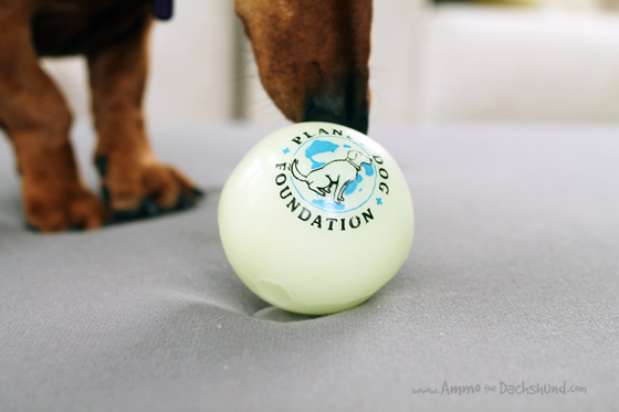 Planet Dog Glow For Good Ball // Ammo the Dachshund