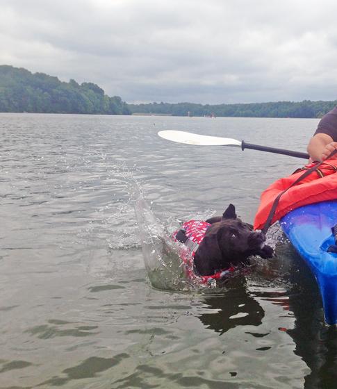 Lake Dogs // Summer // Ammo the Dachshund