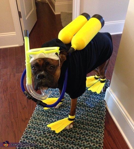 Do It Yourself Home Design: 10 Homemade Costumes For Dogs