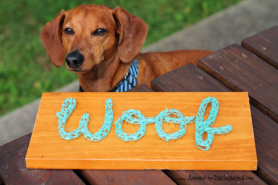 DIY Dog Nail Art // Woof // Ammo the Dachshund