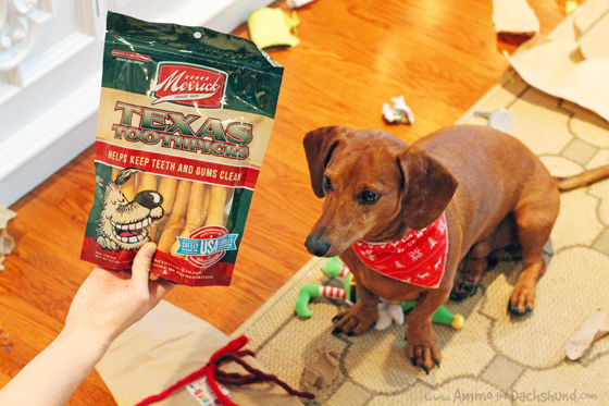 What I did for Christmas // Ammo the Dachshund